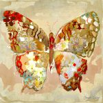 CP017 Butterfly 4
